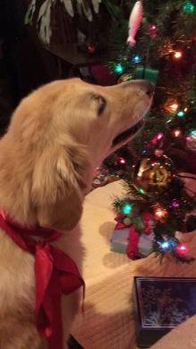 Simba's last Christmas