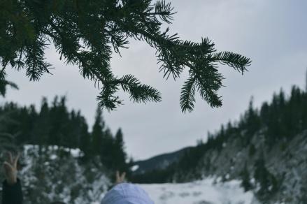 Deciduous Canadian trees
